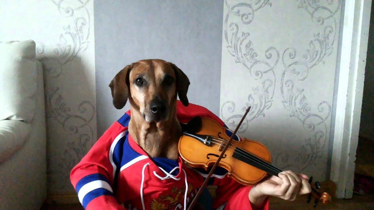 Christmas songs Jingle bells Funny dog play violin - YouTube