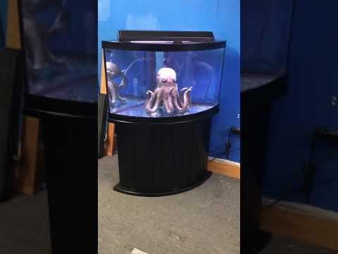 54 Gallon Corner Bowfront Aquarium Fish Tank Complete Set Up $400