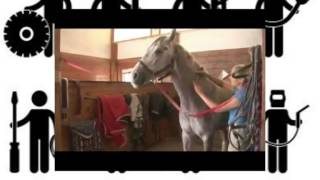 Как сделать укол  ,  внутримышечный укол  лошади