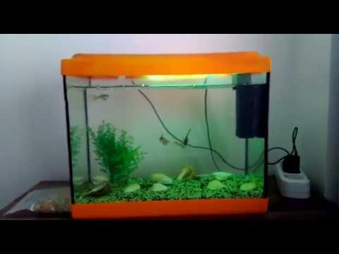 Youtube Kanal Tanıtımı (Acemi Balık Üretimi)