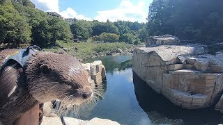 A trip around the scenic river with an otter Part Ⅱ [Otter life Day 129] カワウソとゆく絶景川巡りの旅 Part Ⅱ