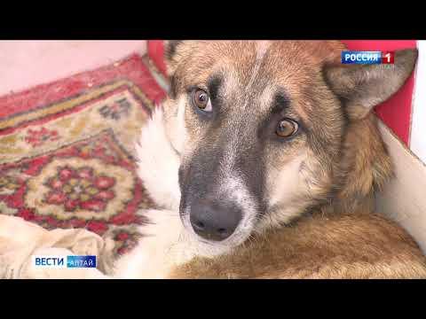 «Ласка» предлагает барнаульцам взять на время кошку или собаку