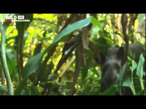 BBC Documentary 2015   Wild Amazon     HD National Geographic Documentary