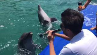 I play clarinet Dolphins sing along