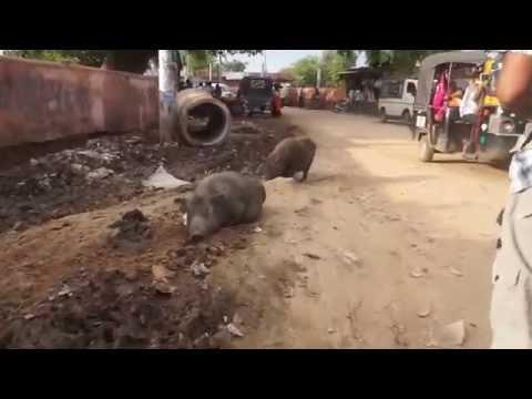 Daytime walk in India through Karauli