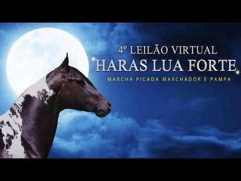 4º LEILÃO VIRTUAL HARAS LUA FORTE