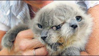 Cat's best photos #2   Подборка ужасов с котами (Коты-мутанты ШОК!!!18+)