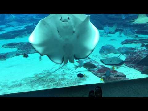 Scuba Diving in The Lost Chambers Aquarium | Atlantis The Palm Dubai