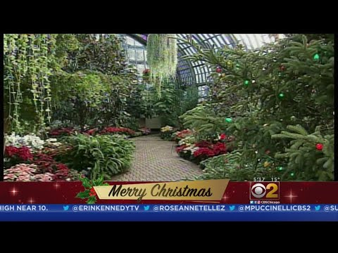 Garfield Park Conservatory Welcomes Guests On Christmas
