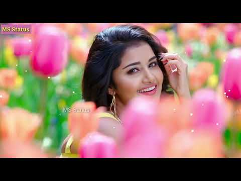 female-version-new-whatsapp-status-||-female-song-status-||-new-love-status-2019