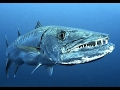 World's Deadliest Animals in The Deep Sea