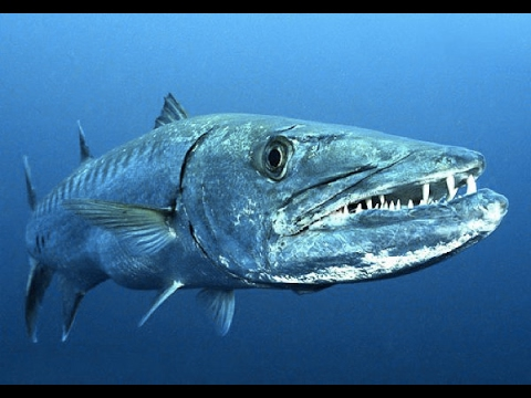 World's Deadliest Animals in The Deep Sea