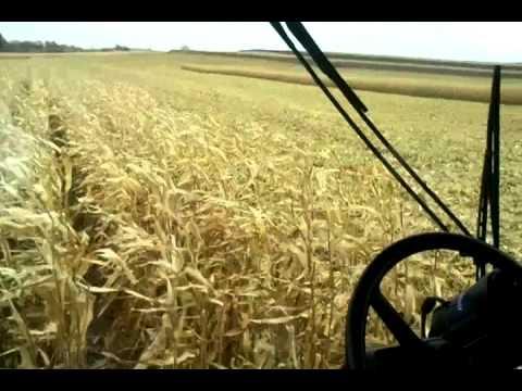 Case IH 2388 combine unloading corn on the go.