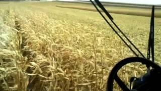 case ih 2388 combine unloading corn on the go