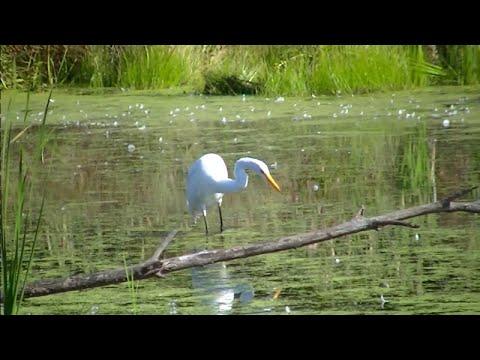 3 Hour Minnesota Wildlife Nature Stunning HD Video !