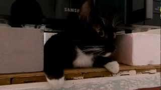 Черно-белый кот и православная печь SAMSUNG