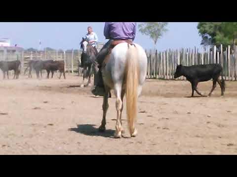 Guardian de taureau en Camargue !!! - YouTube c05cf729ed8