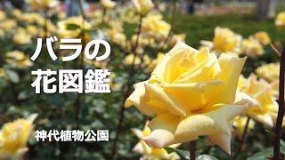 神代植物公園のバラ園。たくさんの種類のバラの花の中から、9種類の花...