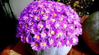 Цветы из гофрированной бумаги - сентябринки