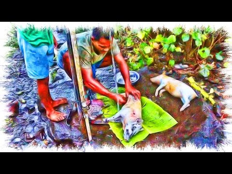 Samoan Movie - How To Cook a Whole Piglet - Primitive Technology of How To Bake It in the Earth Oven