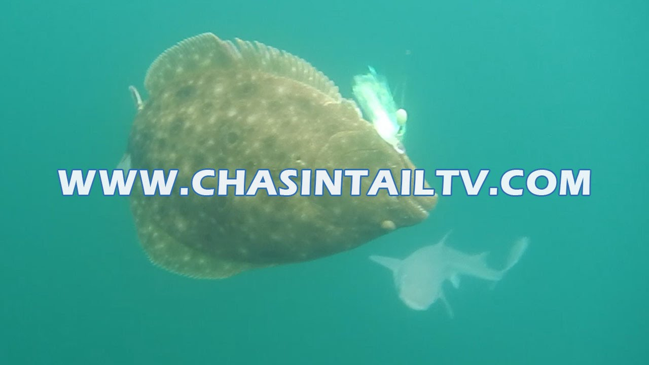 Spring fluke fishing in montauk ny chasin 39 tail tv for Chasing tails fishing report