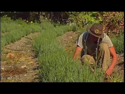 Wedderspoon Organic Herb Farm - Shaw TV Duncan
