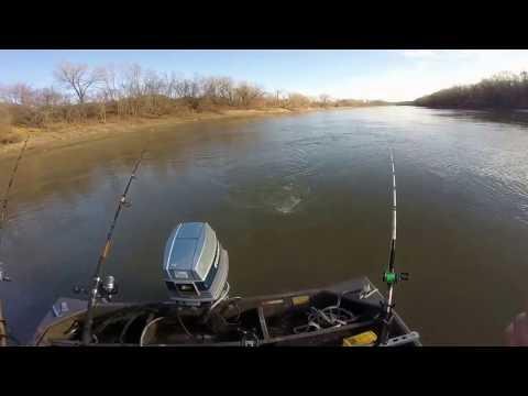 catfishing the kaw