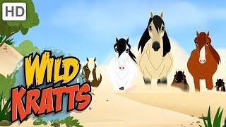 Wild Kratts 🐴 Ponies in the Wild!   Kids Videos