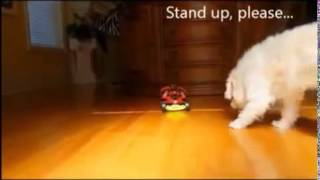Funny Dogs Videos Scary Funny Pranks Animal Funny Video 2013) HD