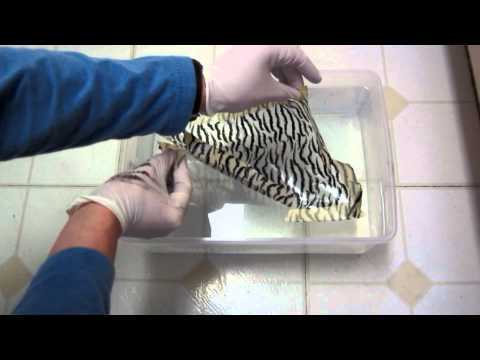 MyDipKit Review DIY hydrographics kit