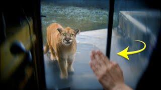 Plötzlich steht dieses Tier vor ihm, seine Reaktion ist mutig!
