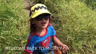 Mic-key TV! EPIC Lanikai Pill Box Hike on Oahu HAWAII with 3 year old Mic-key! Secret Entrance way