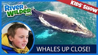 KIDS SEE HUMPBACK WHALES BESIDE THE BOAT!!!