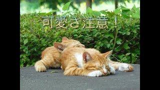 説明 飼い猫ではありません! 関連・おすすめ動画 角刈りの歌 https://y...