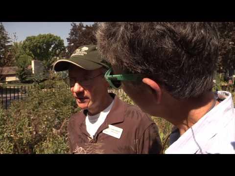 Deb's Big Backyard: Urban Prairie Gardening with Cheney Mansion's Charlie Ruedebusch
