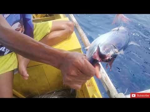 Catching Small Tuna Using (hila-hila) Traditional Fishing!