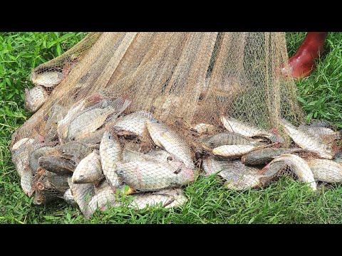 Best Cast Net Fishing || The Fishermen Catch Lots Of Fish With Cast Net