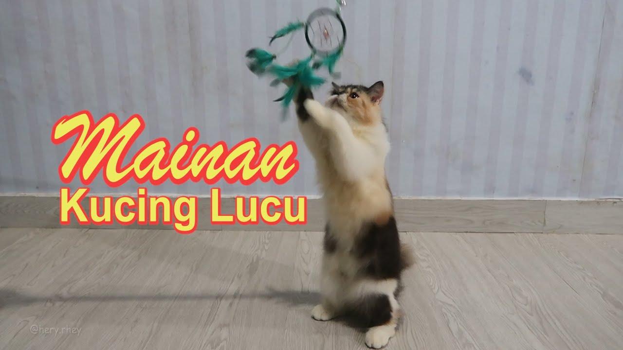 Mainan Kucing Lucu Membuat Mainan Dirumah Aja Bulu Ayam Warna Heryrhey Youtube