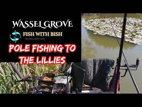 Pole Fishing To Lilies , Wassle Grove Fishery