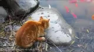 Hài động vật kịch tính