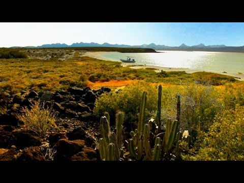 Explore World Famous Sea Of Cortez AKA Gulf of California