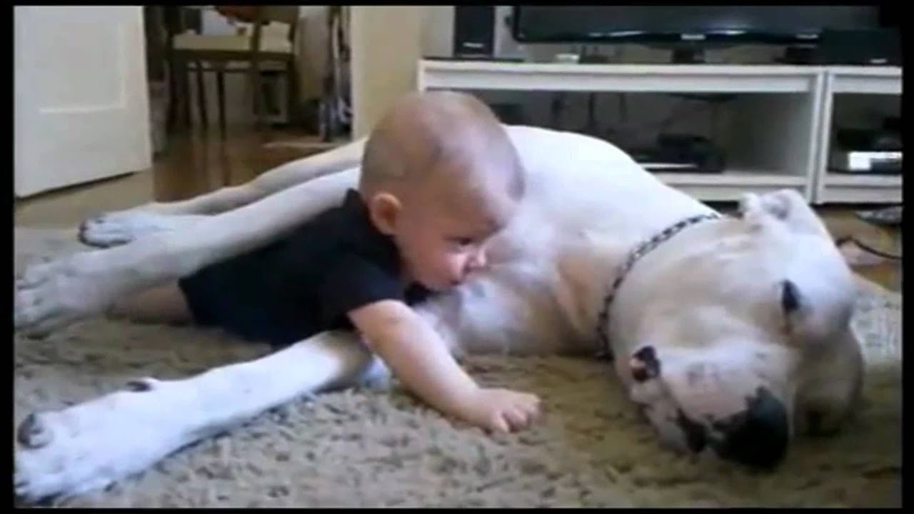 The Best Cuddle Dog And Baby Hd Youtube