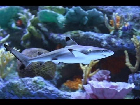 аквариумная акула фото