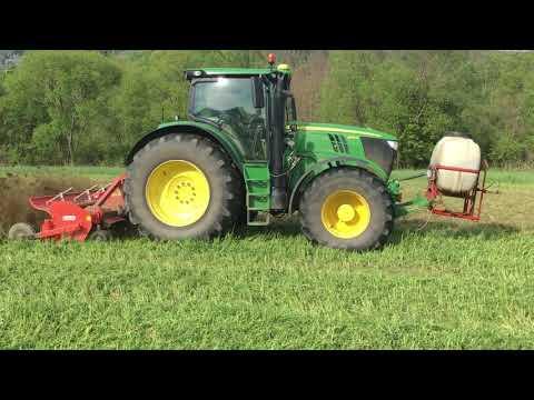 Wickroggen als Vorfrucht vor Mais - Flächenrotte mit EM
