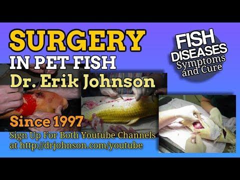 Koi Fish Surgery For Tumors, Egg Bound Fish, Skin Cancer