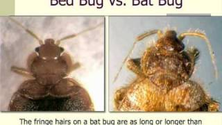 Bedbug Informational Video (part one of two)