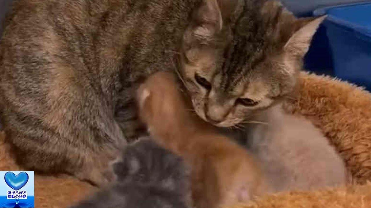 離れ離れになった母猫と子猫が奇跡の再会!しかし奇跡はそれだけではありませんでした・・・【感動】