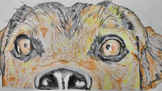 Gambar cover Drawing of a dog (took 1 hour 12 minutes)