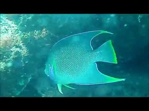 Riomar Reef Vero Beach