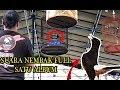 Perhatikan Gantangan No  Aksi Murai Batu Nembak Nembak Full Satu Album M B Gopal Juara   Mp3 - Mp4 Download